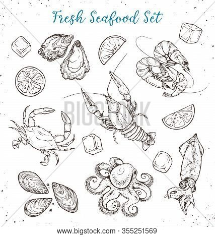 Seafood Sketches Isolated On White Background. Fresh Octopus And Squid, Shrimp, Mussels And Oysters,