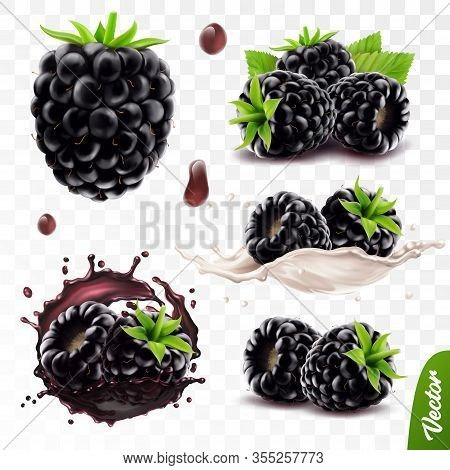 3d Realistic Transparent Isolated Vector Set, Whole And Slice Of Blackberry, Blackberry In A Splash
