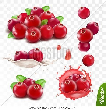 3d Realistic Transparent Isolated Vector Set, Cranberry With Leaves, Cranberry In A Splash Of Juice