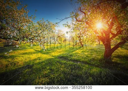 Green meadow and ornamental garden in breathtaking sunny day. Scenic image of trees in charming garden. Flowering orchard in spring time. Perfect natural wallpaper. Beauty of earth, Ukraine.