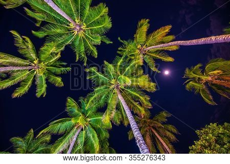 Night View Of Tropical Palm Trees As Seen From Below