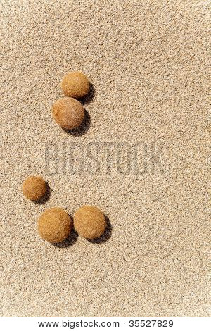 Posidonia oceanica fruits on a mediterranean white sand beach in Balearic islands