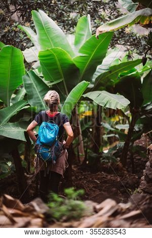 Girl Admire Green Banana And Sugarcane Plants On The Valley. Santo Antao Island In Cabo Verde
