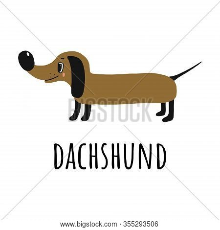 Happy Dachshund.hand-drawn Illustration.dog And The Name Of The Breed In The Doodle Style.isolated O