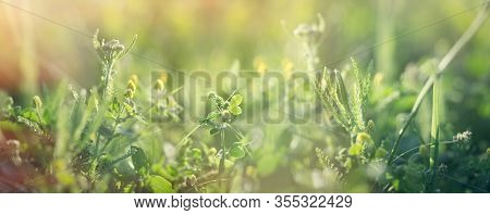 Clover And Fresh Grass In Spring, Beautiful Nature In Meadow