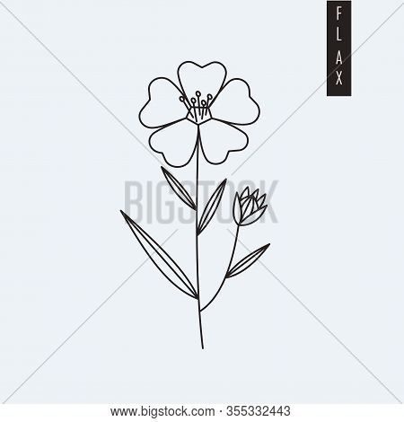 Vector Illustration Of Flax Flower Drawn In Outline Style Isolated On Grey Background. Herbal Botani