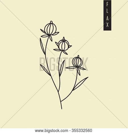 Vector Illustration Of Cultivated Dry Flax Plant With Seeds In Outline Style Isolated On Green Backg
