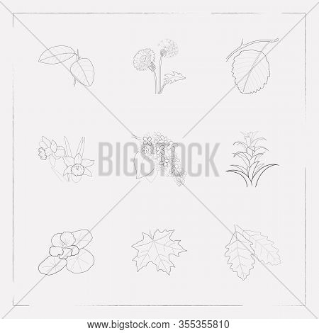 Set Of Plant Icons Line Style Symbols With Maple, Guzmania, Dandelion Icons For Your Web Mobile App