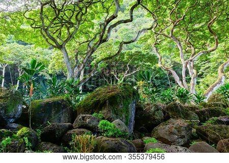 Haleiwa, Oahu, Hawaii, Us - November 06, 2019: View Of The Botanical Garden Of Waimea Valley. Waimea