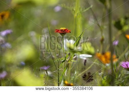 Closeup Of A Wildflower Meadow In Summer