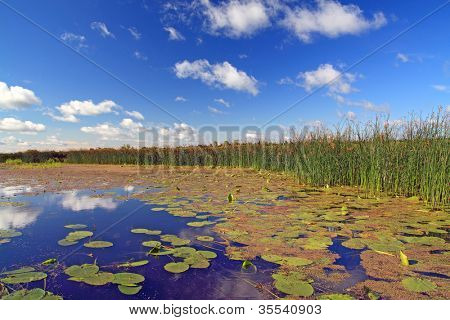 summer marsh under cloudy sky