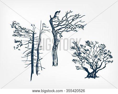 Old Tree Set Design Elements Vector Sketch Illustration Japanese Chinese Oriental Line Art Design El