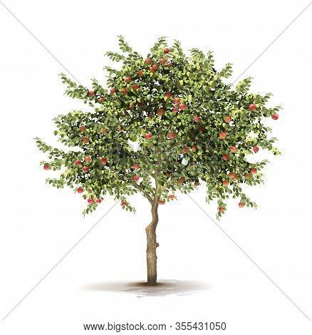 Apple Tree. Ripe Fruits On A Tree. Vector Illustration.
