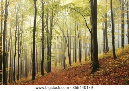 Trail footpath trees autumn forest Nature background mist fog alley Nature background Path pathway parkway Road Autumnal Nature background leaves foliage yellow Travel Nature background Nature background Nature background tree Nature background fall woods