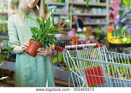 Woman Pick Potted Spathiphyllum Flower For Her Home At Indoor Plant Store