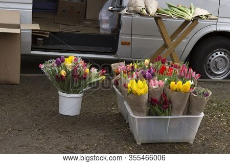 Sale Of Flowering Colorful Tulips By Merchants In Unauthorized Places