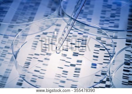 Sample Is Pipetted Into A Petri Dish Over Genetic Results.