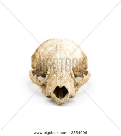 Closeup of An Animal Skull on White Background poster