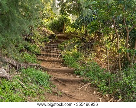 Steep Steps Made From Tree Roots Up The Famous Kalalau Trail On Napali Coast Of Kauai