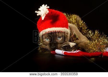 Siamese cat wearing a red Santa hat, with golden tinsel around him; on dark background with copy space