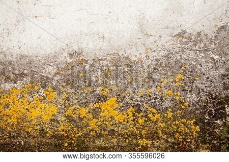 Yellow Mold On The Wall. Fungus On The Surface. Toxic Mold And Fungal Bacterium On A White Wall. The