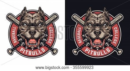 Baseball Team Colorful Badge With Cruel Pitbull Head Mascot And Crossed Baseball Clubs In Vintage St