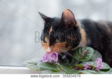 Cat And Home Flower In A Pot . Article About Animals And Home Flowers. Harm Of Ho Me Flowers For Cat
