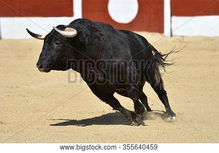 A Powerful Bull With Big Horns On The Spanish Bullring