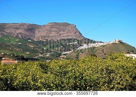 View Of The Town With Lemon Trees In The Foreground, Alora, Malaga Province, Andalucia, Spain, Europ