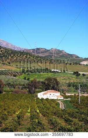 Farmhouse With Orange Trees In The Foreground, Near Alora, Mijas Costa, Malaga Province, Andalucia,