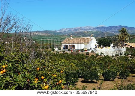 Country Finca Surrounded By Orange Groves Alora, Malaga Province, Andalucia, Spain, Europe.