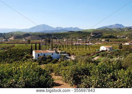 Country Finca Surrounded By Orange Groves, Alora, Malaga Province, Andalucia, Spain, Europe.