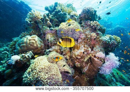 Red Sea Yellow Butterflyfish. Underwater World Scuba Dive Experience. Snorkeling Coral Reef Nature B