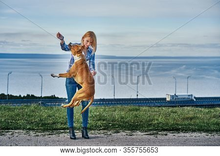 A Young Blonde Girl Is Training A Dog Of The Breed American Staffordshire Terrier.  Summer Cloudy Ev