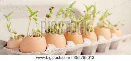 Seedling Plants In Eggshells, Eco Gardening, Montessori, Education, Reuse ,eco Green Sustainable Liv