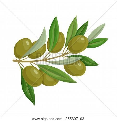 Olive Branch With Green Olives And Leaves Isolated On White Background. Natural Ingredient For Medit
