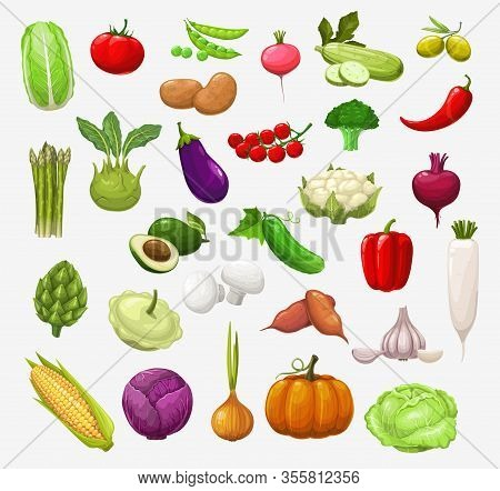 Vector Vegetables And Salads. Tomato, Pepper And Broccoli, Onion And Pea, Cabbage And Zucchini, Chil