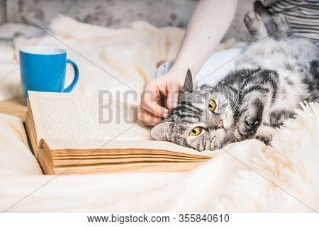 Cozy Home Atmosphere With British Cat Lying On The Book. Weekend At Home Concept With Book And Tea.