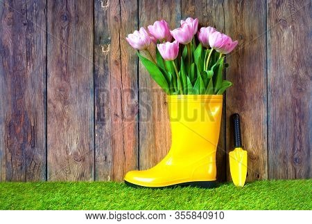 Tulip Picking Concept. Garden Works Background With Pink Tulips In The Yellow Rain Boot. Nearby Is A