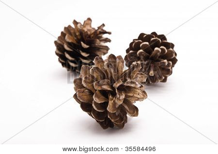 Three Pine Cones On A White Background
