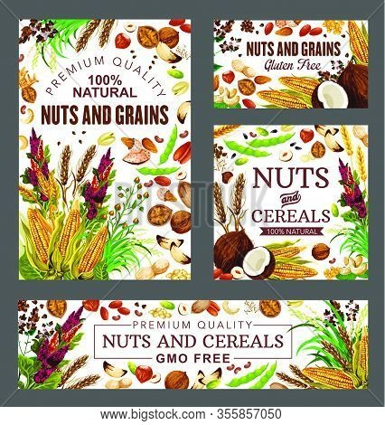 Nuts, Cereal Grains And Beans Vector Health Food. Almond, Peanut And Pistachio, Hazelnut, Walnut And