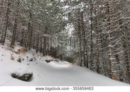 fresh snow covered path in a pine forest of Etna Park, Sicily
