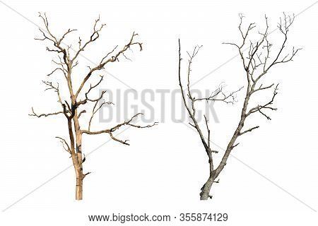 Two Dead Tree Isolated On White Background. Dry Tree Branch With Clipping Path.
