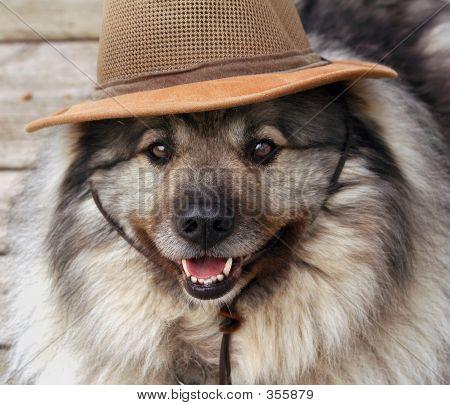 Beko In Hat