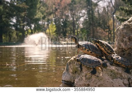 Four Turtles On A Rock Sleeping In A Pond In The Park Of The Quinta De Los Molinos In Madrid, Spain.