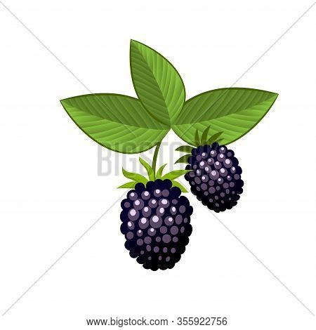 Hand Drawn Branch Bramble Berries With Leaves. Fresh Summer Berries. Fruit Botany Cartoon Vector Ill