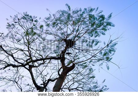 Silhouette Branch Plant Part Of A Tall High Deciduous Tree In Forest Woodland Backgrounds. Nature Ph