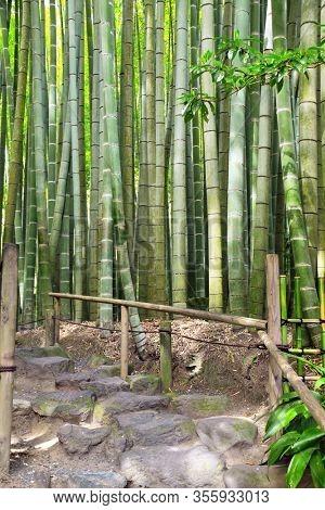 Stone steps and bamboo garden, Hokokuji temple, Kamakura, Japan