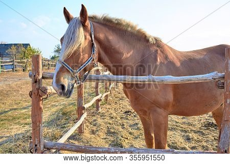 Horse In The Arena. A Beautiful Brown Horse Is Standing In The Stall. Hoss Farm Out Of Town. Horse R