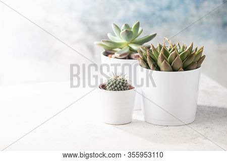 Succulents And Cactus In White Pots On The White Background. Scandinavian Hipster Home Decoration